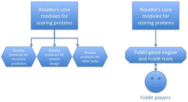 The relationship between Rosetta and Foldit.