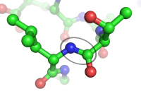 peptide bond: the peptide bond showing the N (blue) and the O (red)